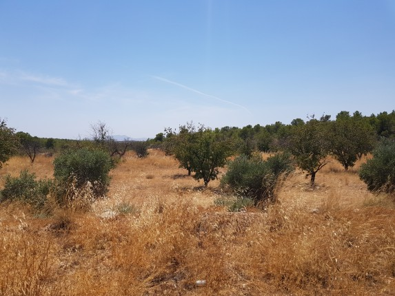 Land Of 22 359 Square Meters In The Area Of Las Terreras